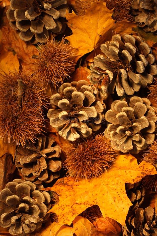 Erstaunliche Herbst- oder Fallfarben. lizenzfreies stockfoto