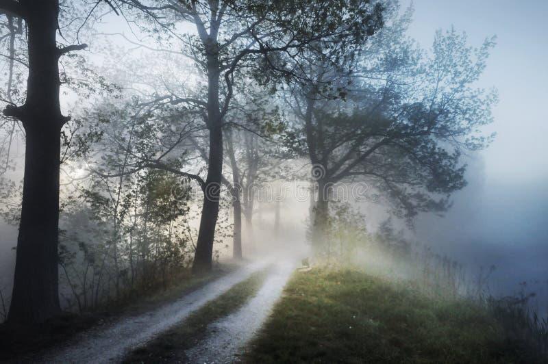 Erstaunliche nebelige Landschaft lizenzfreie stockbilder