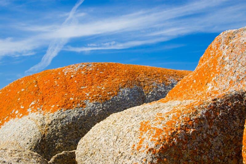 Erstaunliche orange Flechte auf Felsen lizenzfreie stockfotos