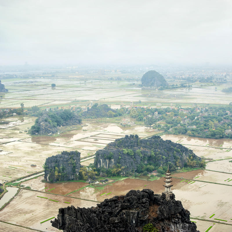 Erstaunliche Panoramaansicht der Reisfelder, Ninh Binh, Vietnam stockbild