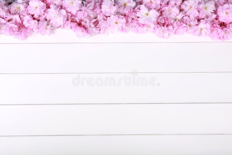 Erstaunliche rosa Pfingstrosen auf weißem rustikalem hölzernem Hintergrund stockfotografie