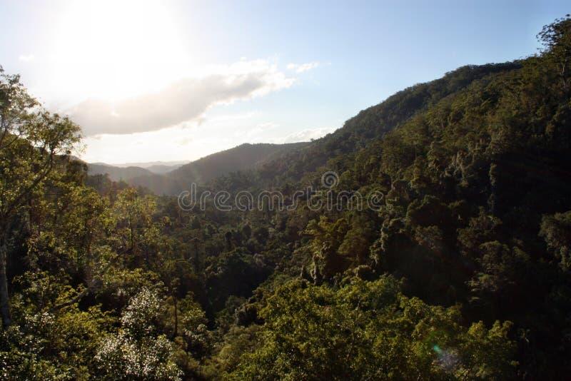 Erstaunliche Sonnenuntergangansicht in Nationalpark Kondalilla stockfotos