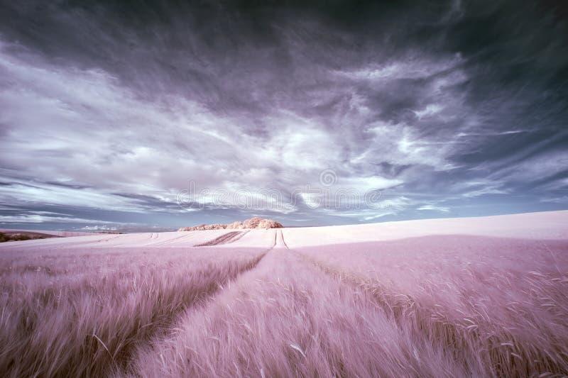 Erstaunliche surreale falsche Farbeinfrarotsommerlandschaft über agri lizenzfreies stockfoto