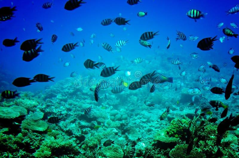 Erstaunliche unterseeische Welt von Rotem Meer. lizenzfreie stockbilder