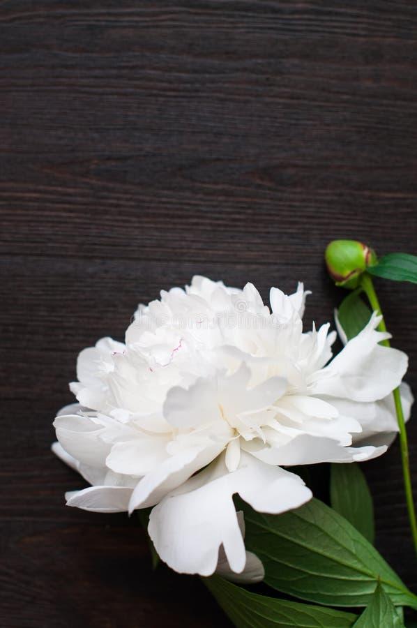 Erstaunliche weiße Pfingstrosen auf rustikalem hölzernem Hintergrund stockfotografie