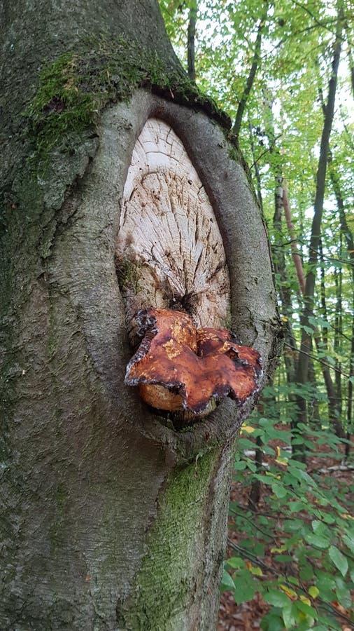 Erstaunlicher Baum lizenzfreie stockbilder