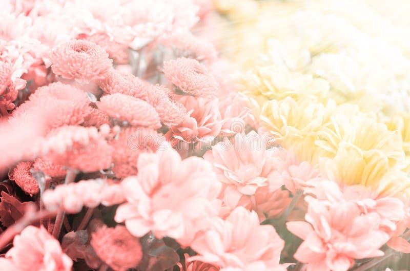 Erstaunlicher Blumenhintergrund mit Sonnenstrahlen stockfotografie
