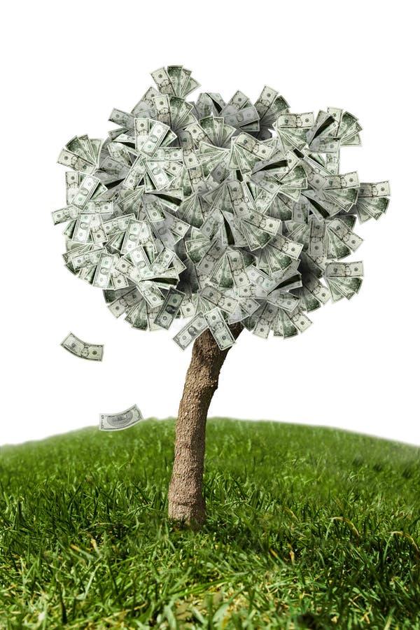 Erstaunlicher Geldbaum auf Gras und weißem Hintergrund stock abbildung