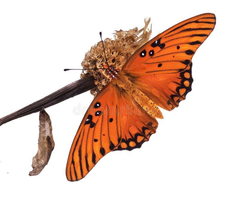 Erstaunlicher Moment über Schmetterlingsänderungs-Formpuppe Golf-Fritte stockfoto
