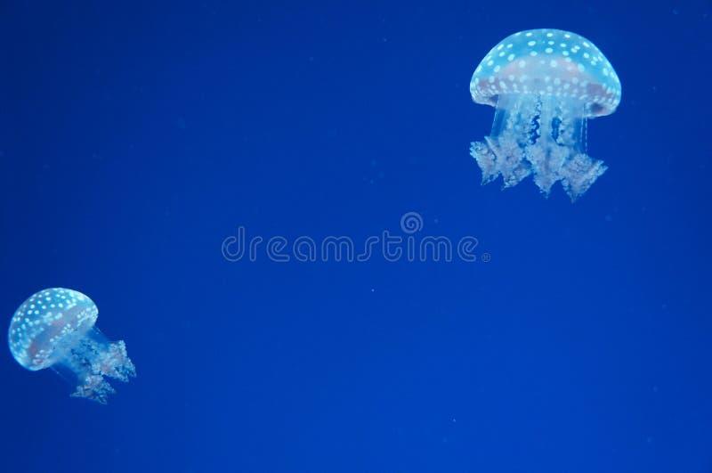 Erstaunlicher Ozean lizenzfreies stockbild