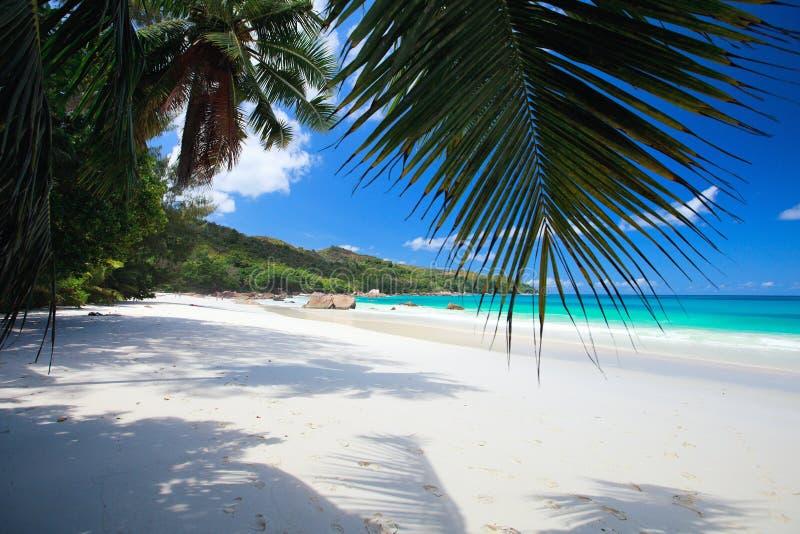 Erstaunlicher tropischer Strand bei Seychellen lizenzfreie stockfotos
