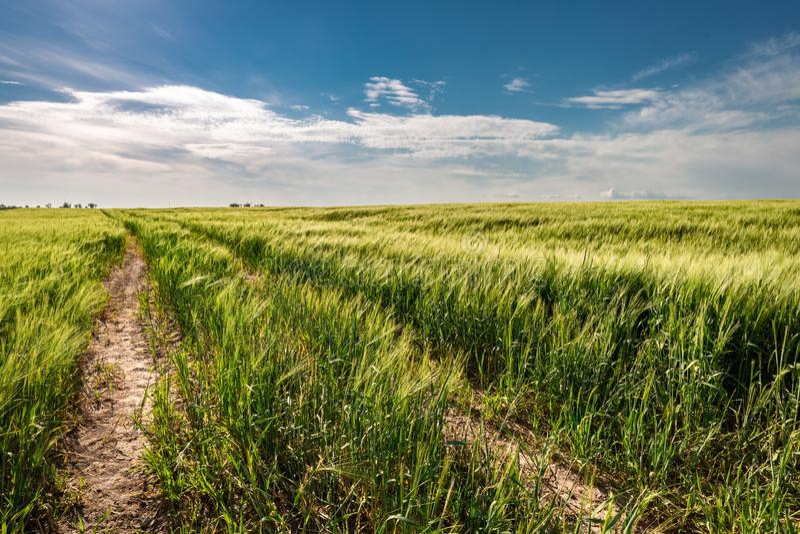 Erstaunliches gr?nes Feld mit Landstra?e im Sommer, Polen stockfoto