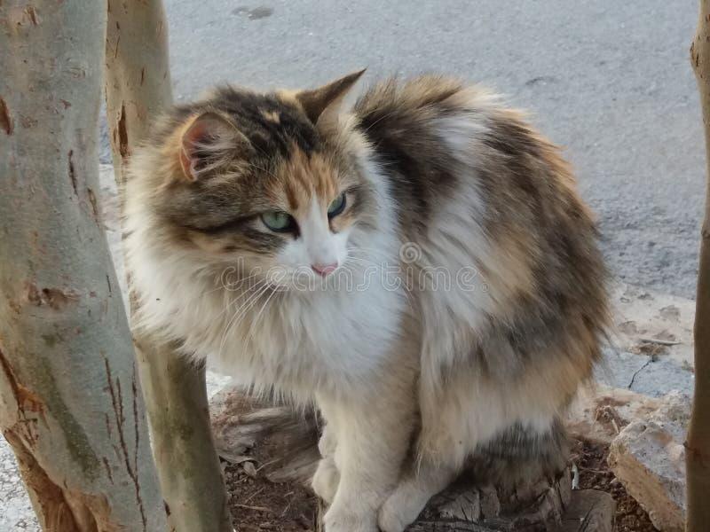 Erstaunliches Katzenhaustierbild lizenzfreies stockbild