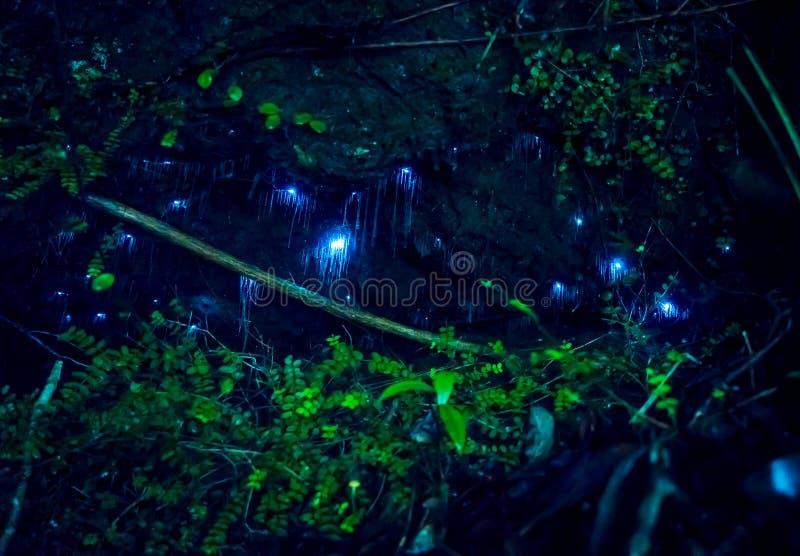 Erstaunliches waitomo Glühwürmchen in den Höhlen, gelegen in Neuseeland lizenzfreie stockbilder