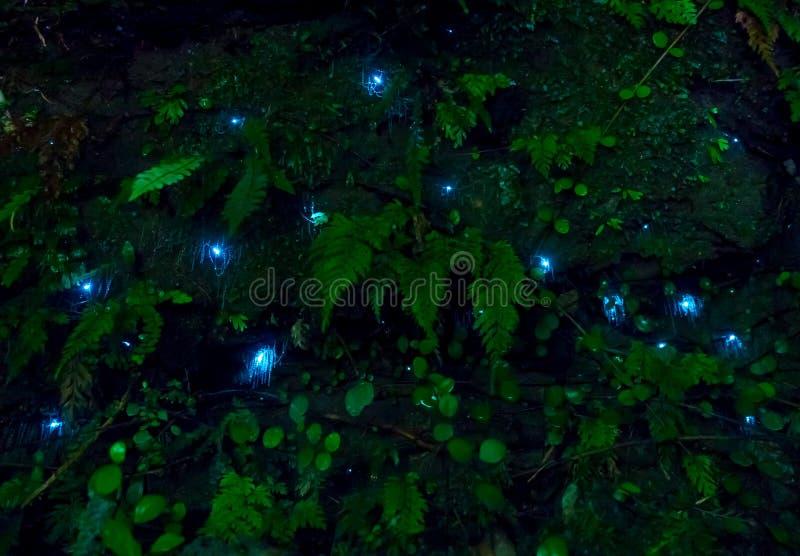 Erstaunliches waitomo Glühwürmchen in den Höhlen, gelegen in Neuseeland lizenzfreie stockfotografie