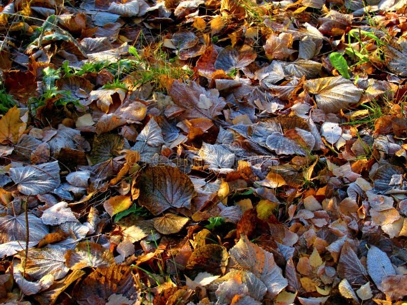 Erste Autumn Night Frosts lizenzfreie stockbilder