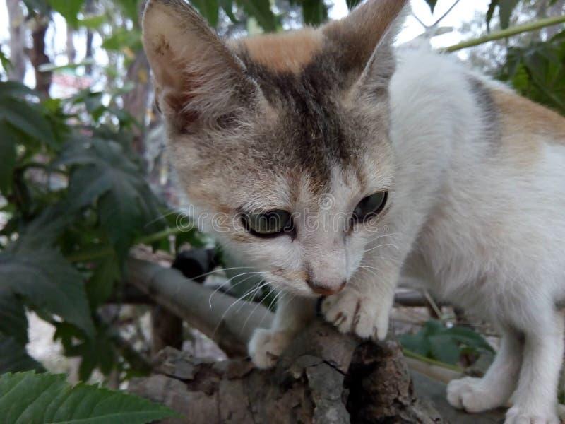 Erste Katze lizenzfreie stockbilder