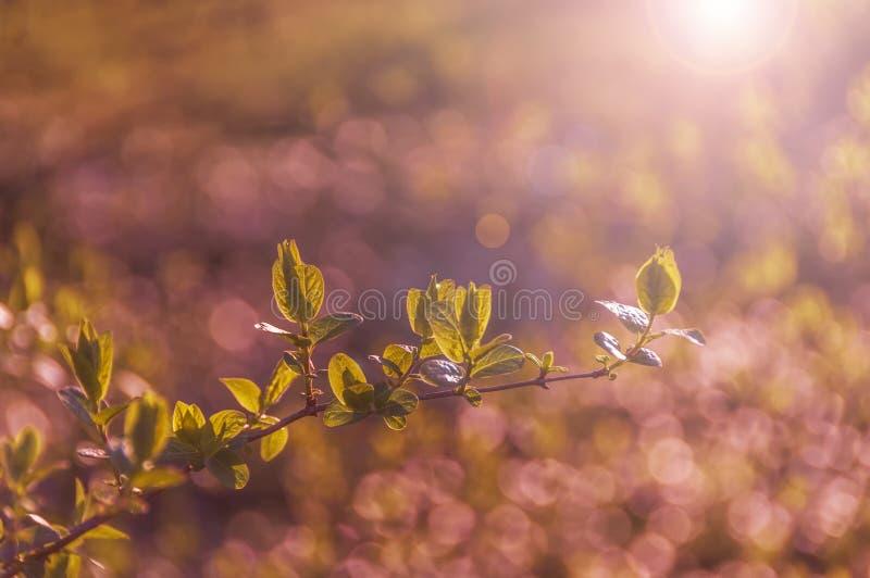 Erste zarte grüne Blätter auf Bäumen im Frühjahr stockbild