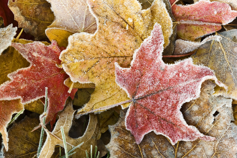 Erster Frost stockfotos