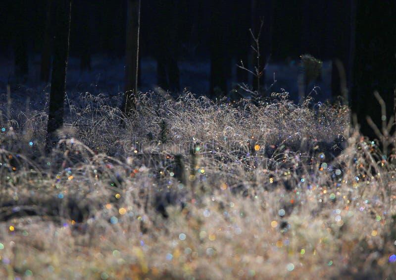 Erster Frost der Jahreszeit lizenzfreie stockfotos