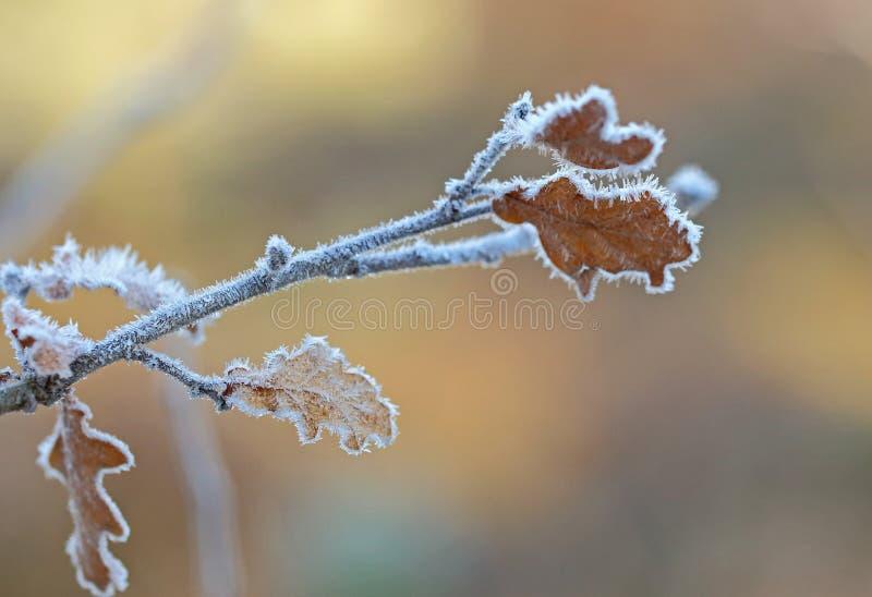 Erster Frost der Jahreszeit stockbild