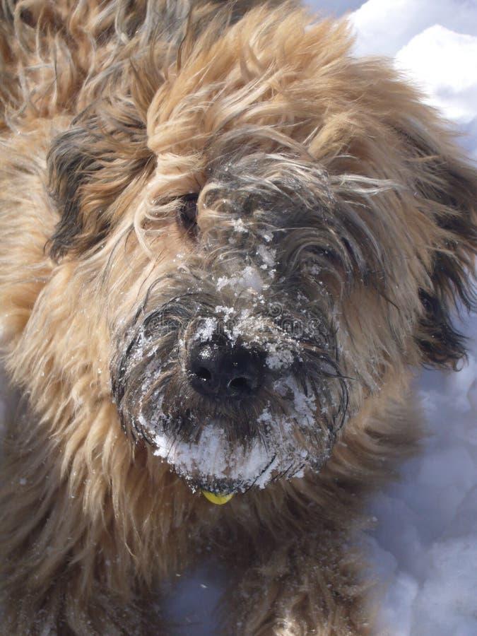Erster Geschmack des Schnees stockbild