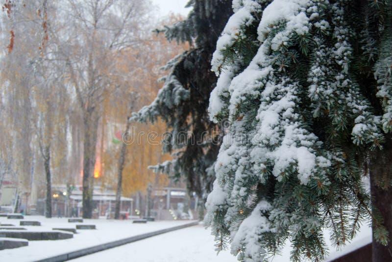 Erster Schnee stockfotos