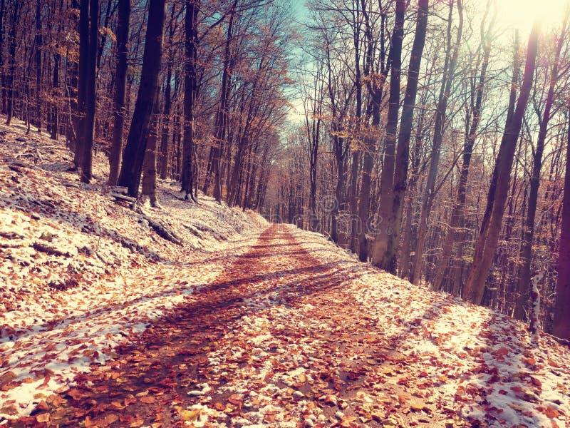 Erster Schnee auf bunten Blättern Herbstliche Natur Straße im Herbstholz lizenzfreie stockbilder