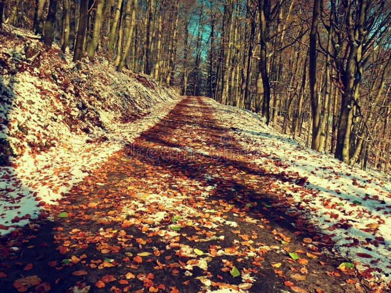 Erster Schnee auf bunten Blättern Herbstliche Natur Straße im Herbstholz lizenzfreies stockbild