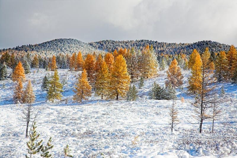 Erster Schnee im Herbst stockfotos
