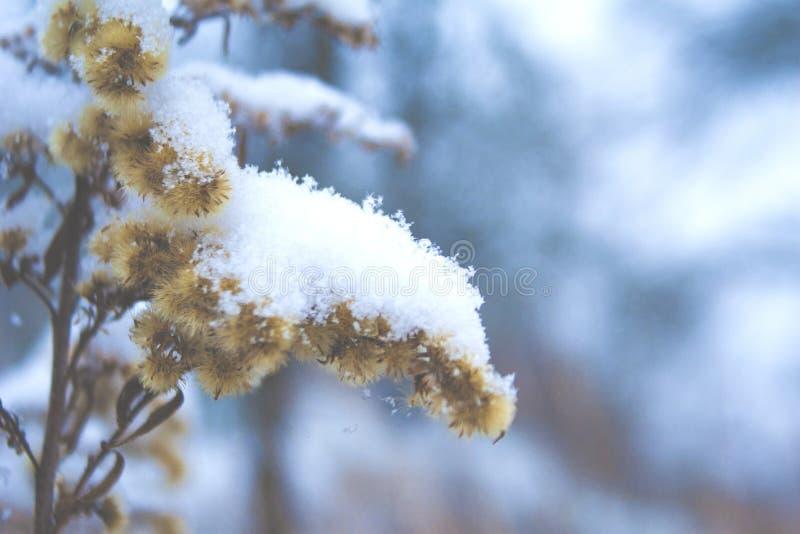 Erster Schnee im Jahre 2018 stockfotos
