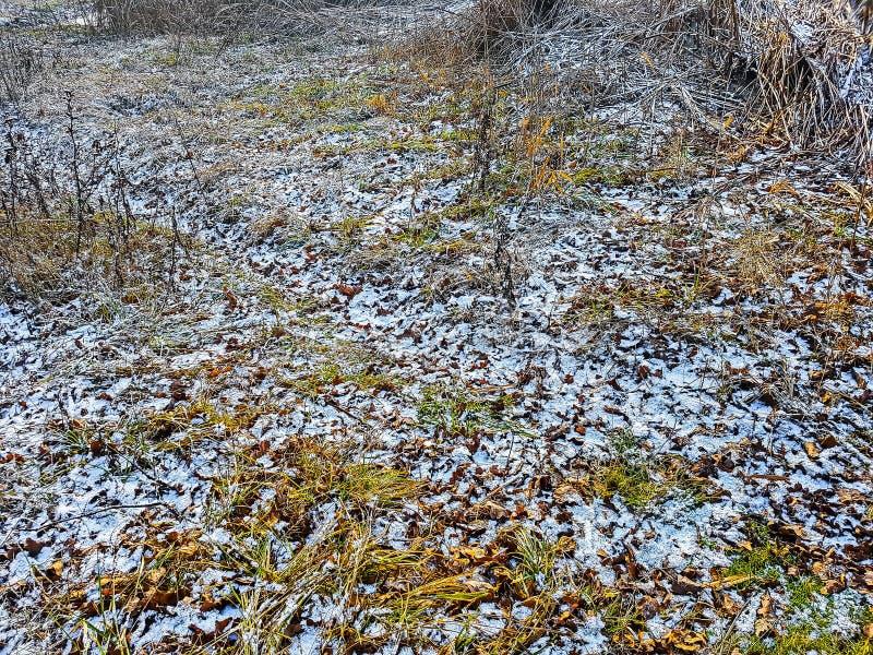 Erster Winterfrost stockbild