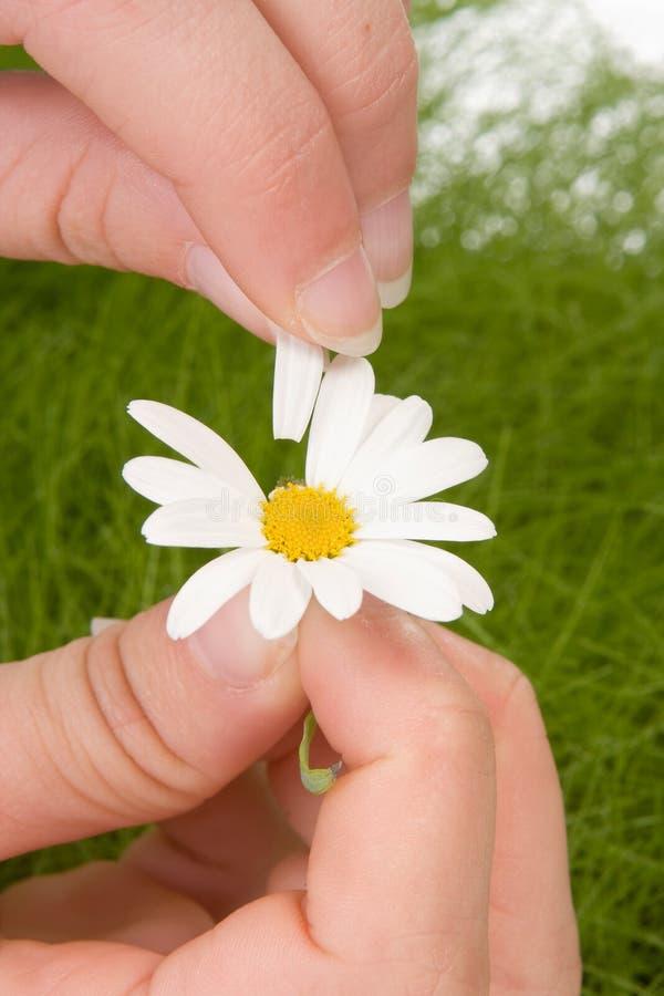 Erstes Blumenblatt stockfotos
