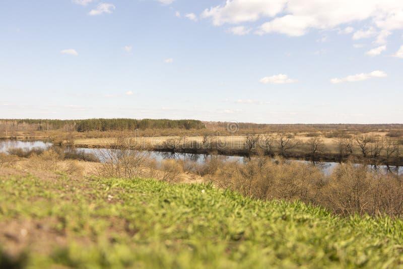 Erstes grünes Gras stockfotografie
