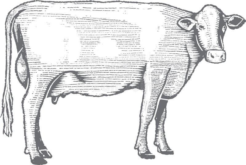 Erstklassige Vektor-Holzschnitt-Kuh-Illustration lizenzfreie stockfotos