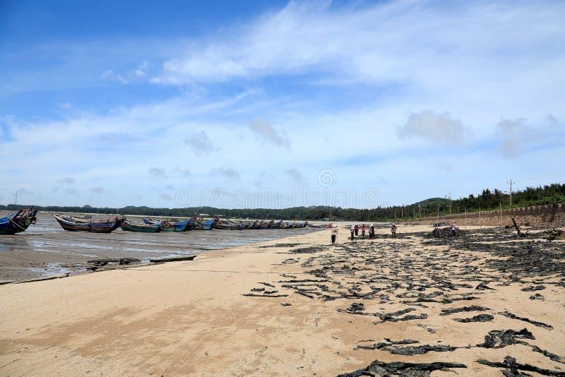 Ertsaderrots in de kust van meizhoueiland royalty-vrije stock fotografie