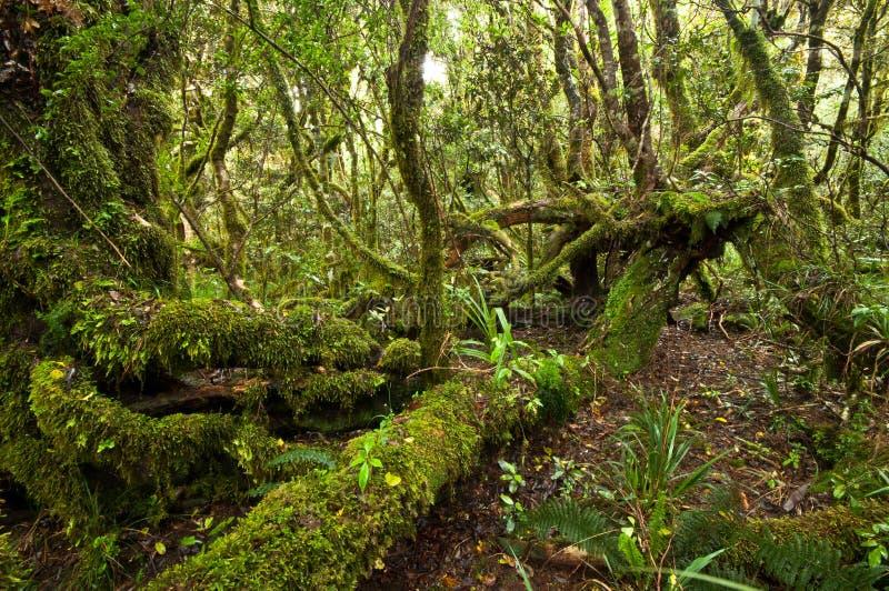 Erua skog fotografering för bildbyråer