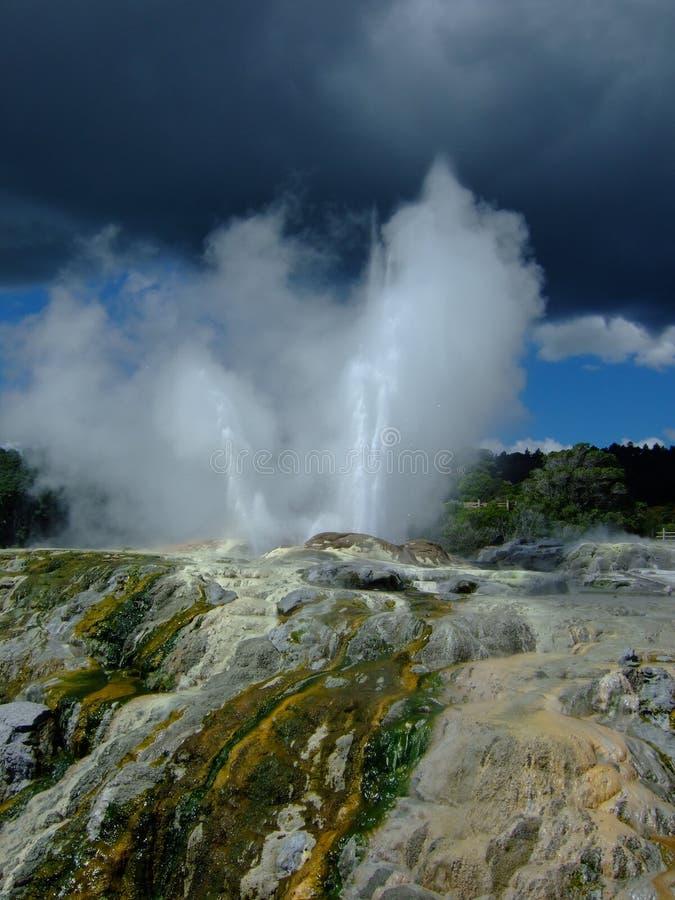Eruzione del geyser in Rotorua immagine stock