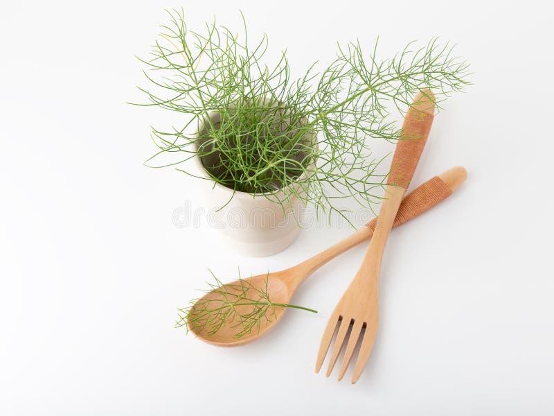 Erva aromática da erva-doce para cozinhar fotos de stock royalty free