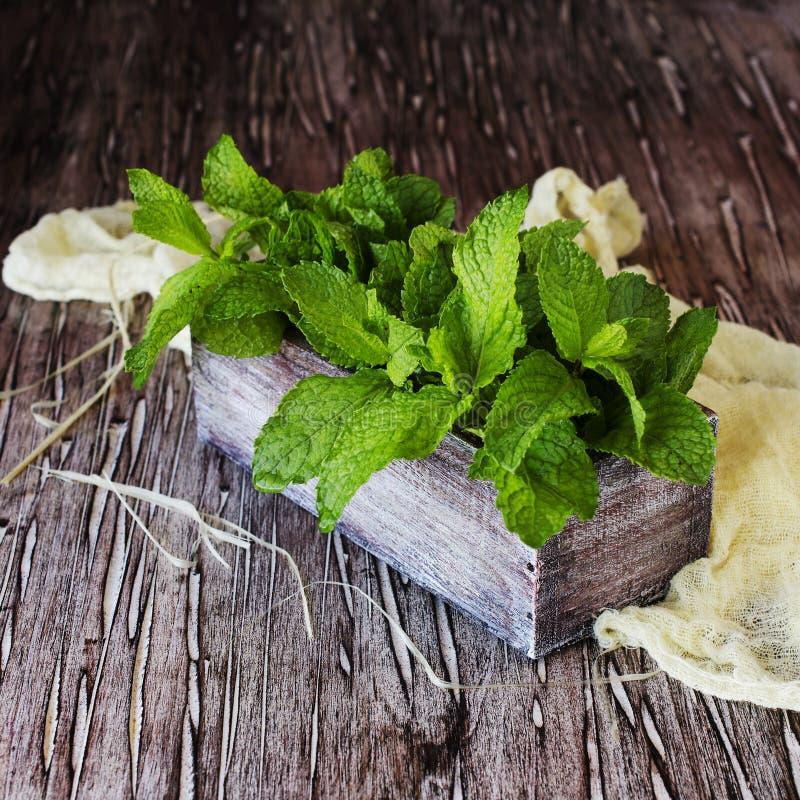 Erva-cidreira ou hortelã fresca em uma caixa de madeira pequena fotografia de stock royalty free