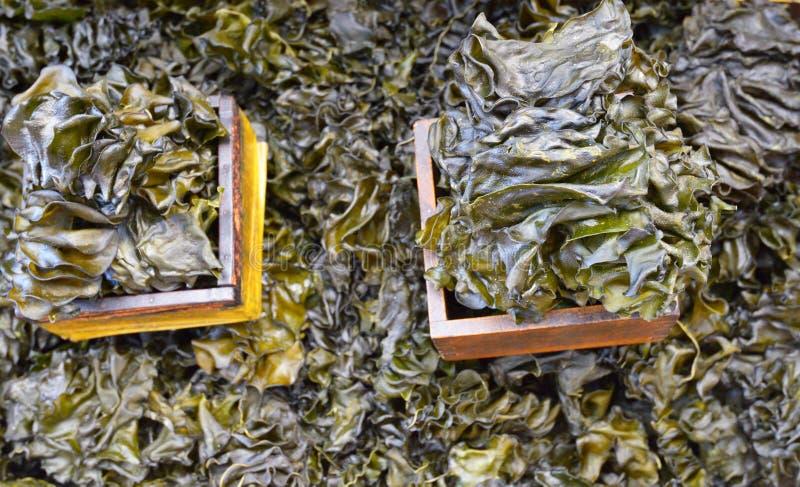 Erva daninha do mar foto de stock royalty free