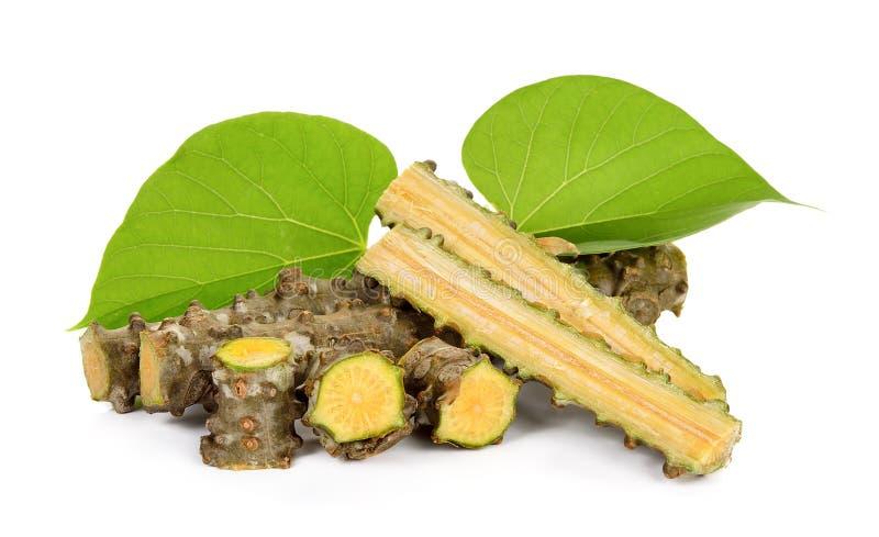 Erva do cordifolia de Tinospora isolada imagem de stock