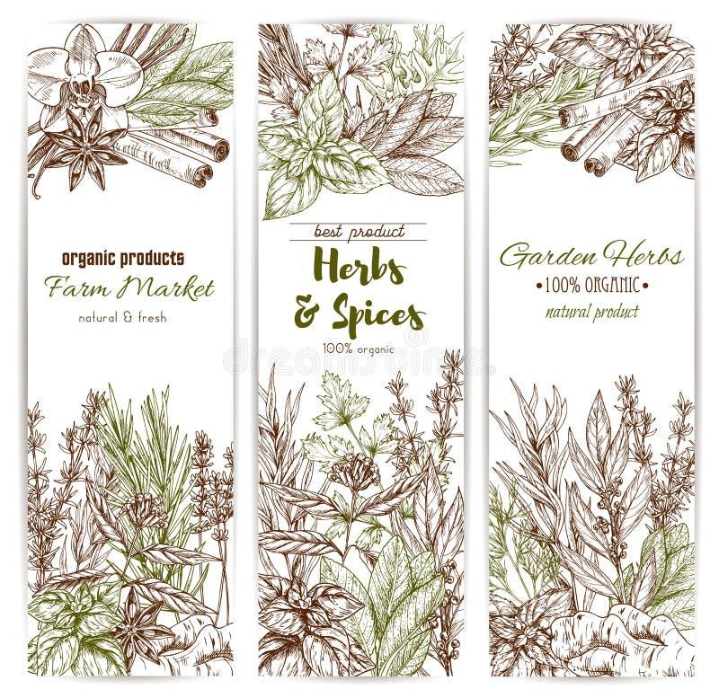 A erva e a especiaria esboçam a bandeira do tempero orgânico ilustração royalty free