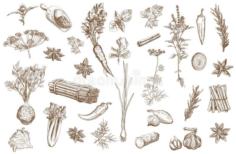 Erva e especiarias ajustadas ilustração royalty free