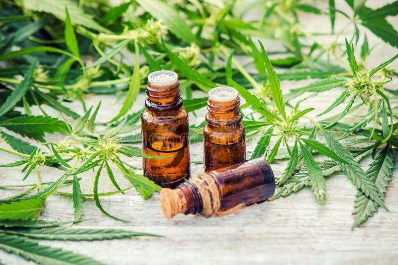 Erva e folhas do cannabis para o tratamento imagens de stock
