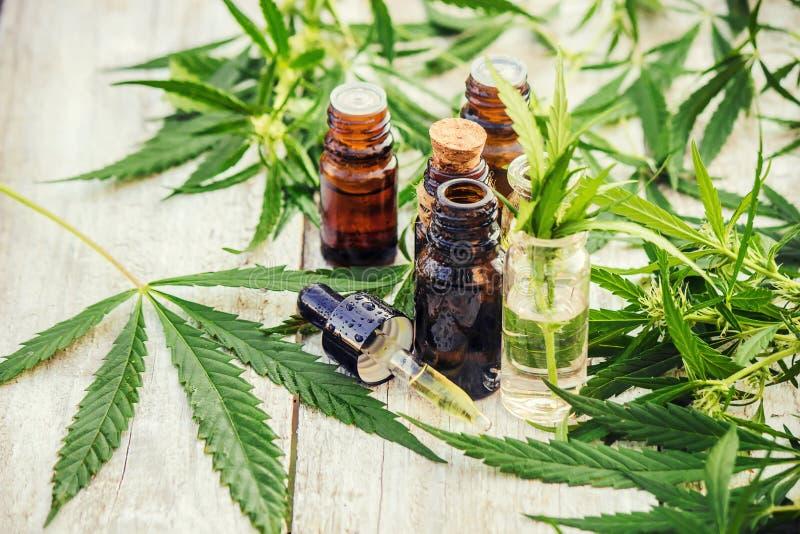 Erva e folhas do cannabis para o tratamento imagem de stock