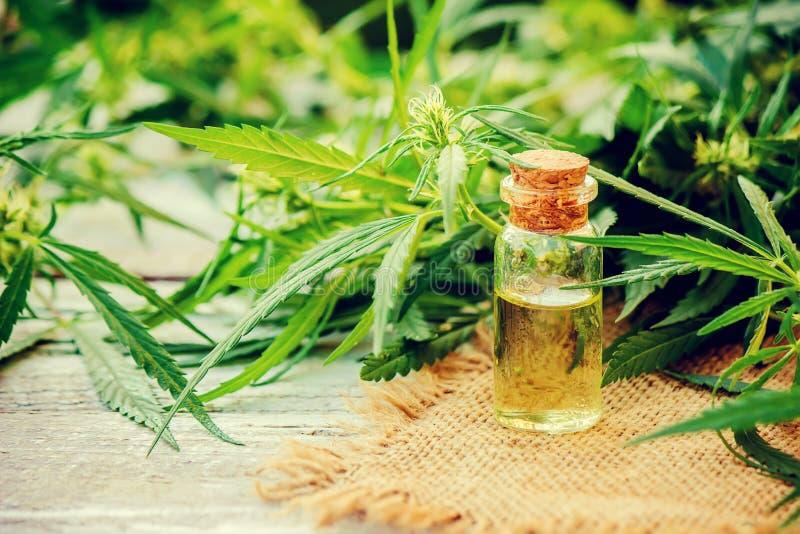 Erva e folhas do cannabis para o tratamento fotos de stock royalty free