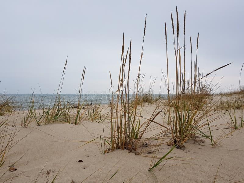 A erva seca alta cresce na praia arenosa abandonada, no mar azul e no céu, a paisagem marítima no outono, no dia overcast imagens de stock royalty free