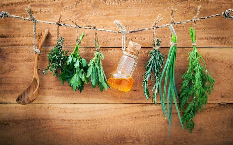A erva sortido empacota a salsa de suspensão, sábio, alecrim, aneto, sprin fotografia de stock royalty free