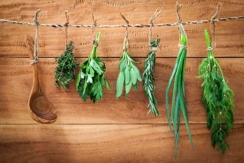 A erva sortido empacota a salsa de suspensão, sábio, alecrim, aneto, sprin imagens de stock royalty free